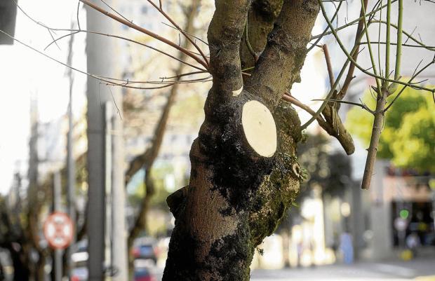 Corte de galhos feito pela RGE irrita ambientalistas de Caxias do Sul Diogo Sallaberry / Agência RBS/Agência RBS