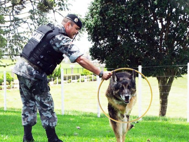 Morre cão policial mais popular da BM de Caxias do Sul Jackson Cardoso / CRPO Serra/Divulgação/CRPO Serra/Divulgação
