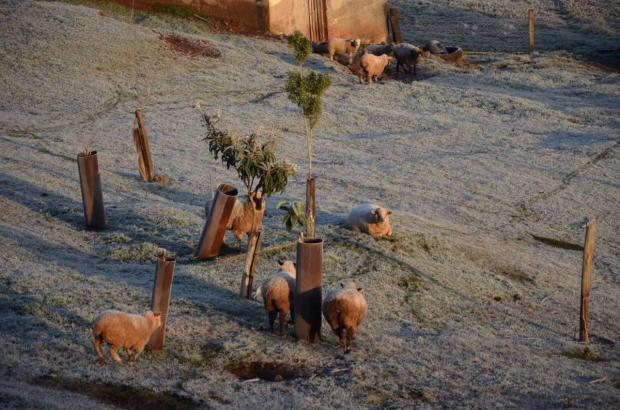 Serafina Corrêa e Vacaria registram as temperaturas mais baixas do Estado nesta quarta-feira Thaís Bison / divulgação/divulgação