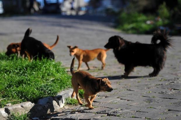 Caxias do Sul tem 270 animais na espera por castrações Felipe Nyland/Agencia RBS