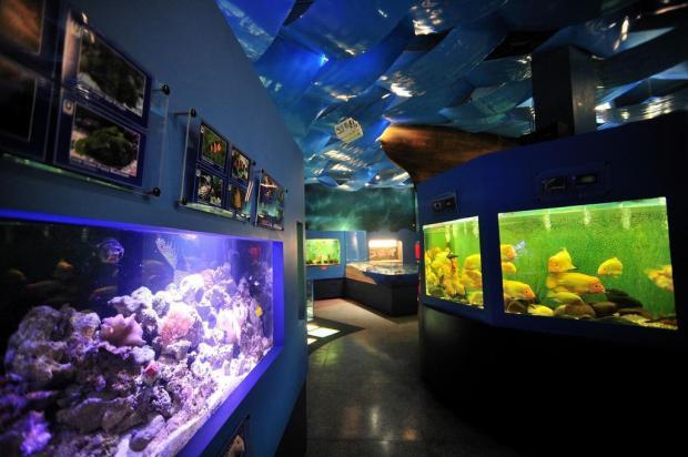 UCS Aquarium reabre com 101 espécies e 14 aquários em Caxias do Sul Diogo Sallaberry/Agencia RBS