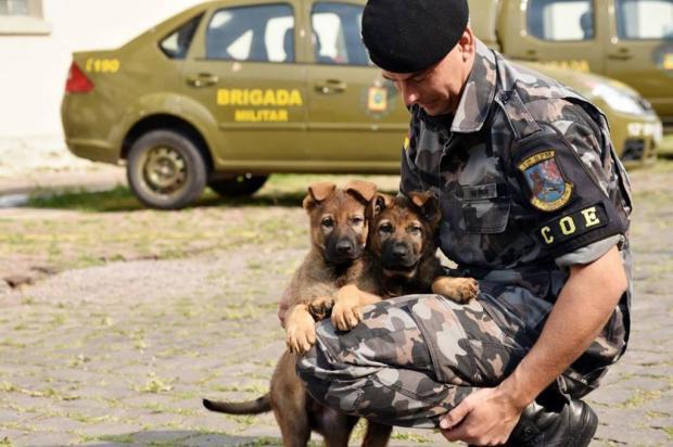 Canil da Brigada Militar, em Caxias do Sul, ganha dois cachorros Jackson Cardoso/divulgação