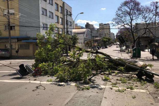 Caminhão arranca árvore e tranca trânsito no centro de Caxias Diego Mandarino/agência RBS