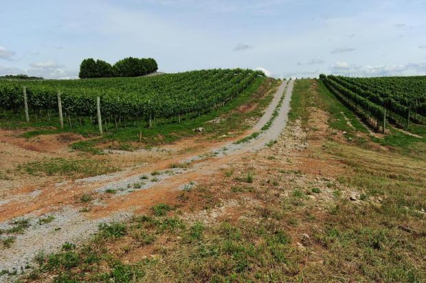 Condomínios vitivinícolas são apontados como tendência de ocupação do Vale dos Vinhedos, na Serra Porthus Junior/Agencia RBS