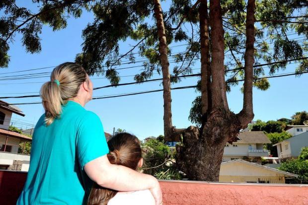 Poda de árvores no espaço público pode levar até seis meses, em Caxias Diogo Sallaberry/Agencia RBS