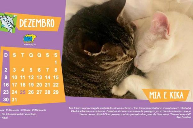 3por4: Calendário 2018 da Soama reforça o poder transformador da adoção Agência 42/Divulgação