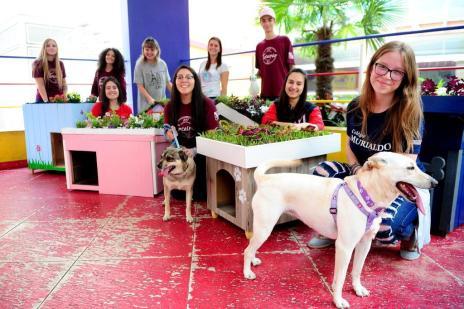 Ação promove adoção de cães e doação de casinhas ecológicas, em Caxias do Sul (Diogo Sallaberry/Agencia RBS)