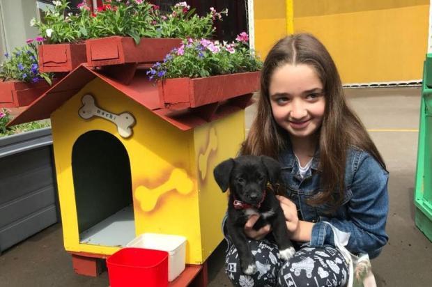Projeto de casinhas ecológicas consegue lar para cinco cães em Caxias do Sul divulgação/Divulgação