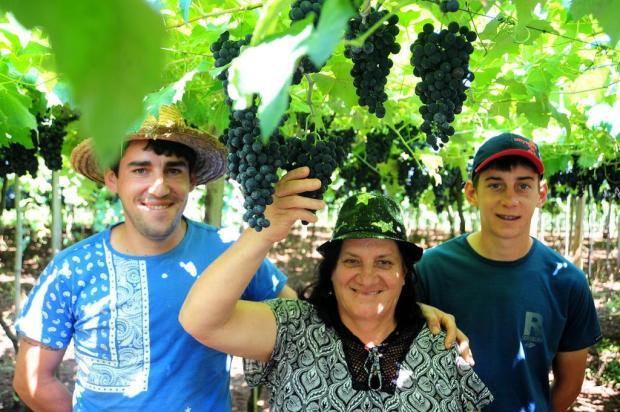 Falta de frio antecipa colheita da uva na Serra Gaúcha Felipe Nyland/Agencia RBS