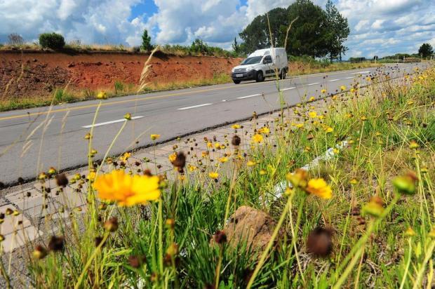 Rota do Sol: conheça o casal que plantou flores na rodovia e outros apaixonados pela estrada Porthus Junior/Agencia RBS