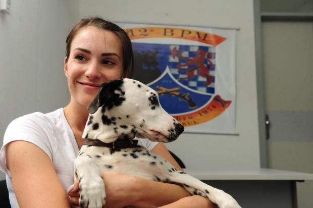 Cachorra da raça dálmata é recuperada em Caxias após ser furtada em São Marcos Roni Rigon/Agencia RBS