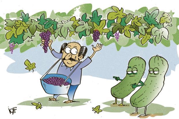 Iotti: Sartori na colheita da uva na Serra Iotti/