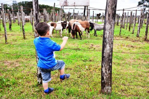 Festa do Figo e Rodeio Internacional de Vacaria são opções de lazer neste fim de semana na Serra Artur Alexandre/Especial