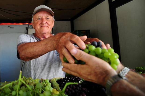 Venda de uvas segue até abril na Praça Dante Alighieri, em Caxias Marcelo Casagrande/Agencia RBS