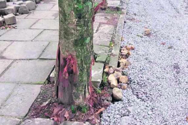 18 árvores foram mutiladas no bairro Cristo Redentor, em Caxias Rafael Bueno/Divulgação