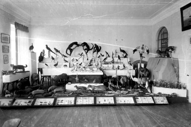 Memória: primórdios do Museu Municipal na década de 1950 Studio Geremia/Acervo Arquivo Histórico Municipal João Spadari Adami,divulgação