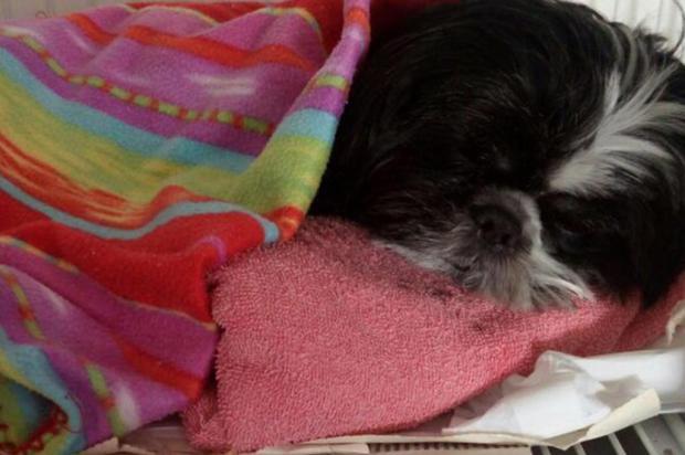 Moradores denunciam envenenamento de animais em condomínio de Caxias Claudino de Moura/divulgação