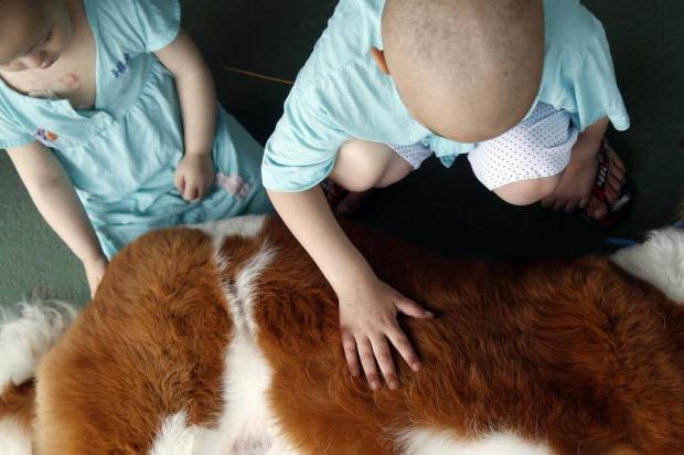 Saiba como funciona encontro entre paciente e animal de estimação no Hospital Tacchini, em Bento Guto Kuerten/Agencia RBS