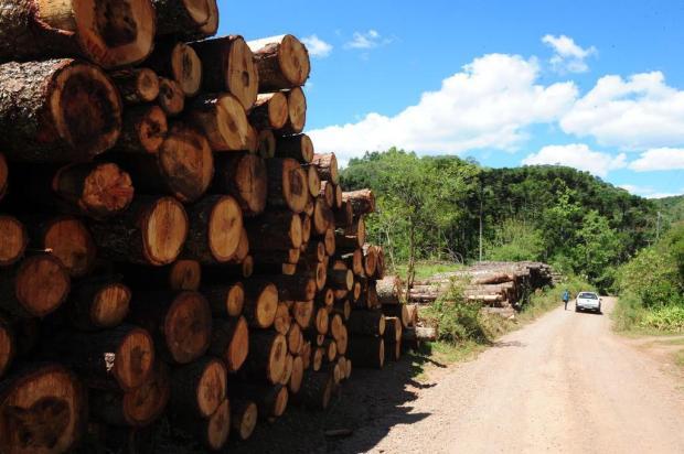Derrubada de 300 árvores foi autorizada pela prefeitura de Caxias Roni Rigon/Agencia RBS