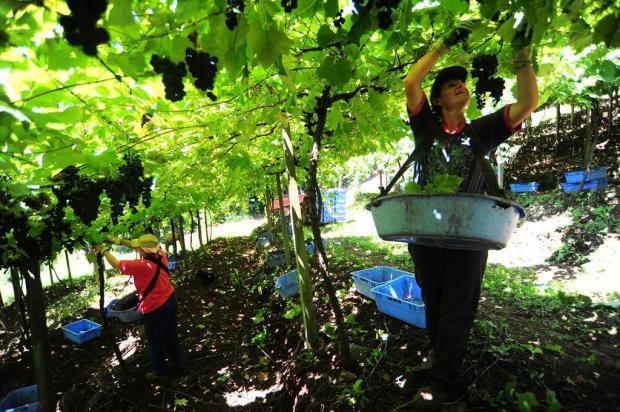 Mulheres ganham espaço no agronegócio da Serra Porthus Junior/Agencia RBS