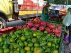Feira ecológica realiza ação para marcar a chegada da Primavera Rosa Ana Bisinella/Divulgação