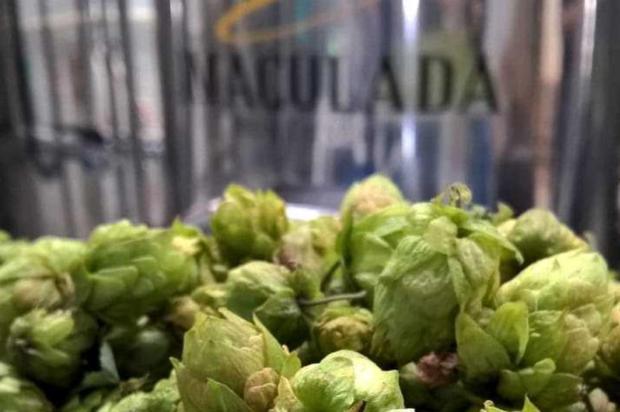 Cerveja é produzida em Caxias com lúpulo fresco de São Francisco de Paula Marcus Gazzola/divulgalção