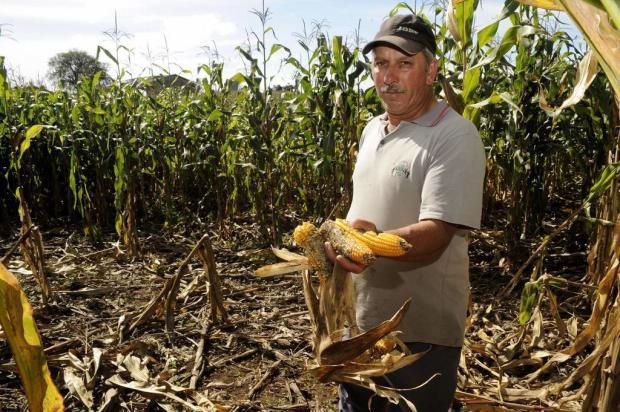 """""""É uma afronta"""", diz agricultor de Caxias sobre os javalis Marcelo Casagrande/Agencia RBS"""