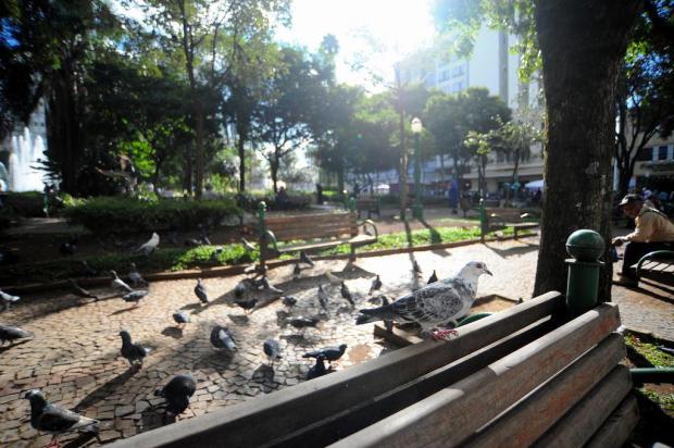 Prefeitura desiste de remover pombos das praças de Caxias do Sul Felipe Nyland/Agencia RBS