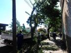 Implantação de sistema que controla desmatamento no país é prorrogada em municípios da Serra Porthus Junior/Agencia RBS