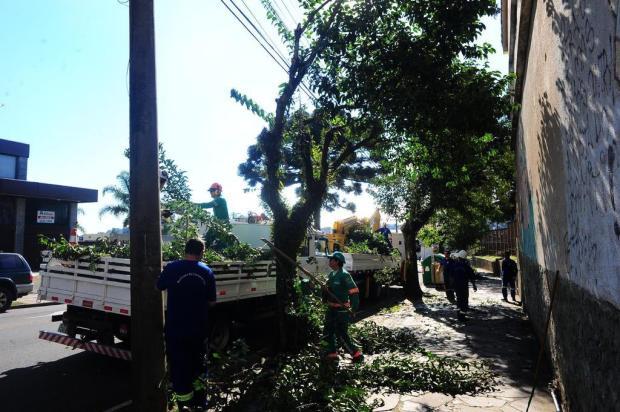 Decreto da prefeitura de Caxias sobre poda de árvores deve chegar ao MP Porthus Junior/Agencia RBS