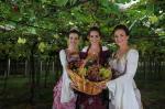 Trio da Festa da Uva de 2016: veja os melhores momentos do reinado de Rafaelle, Laura e Patrícia