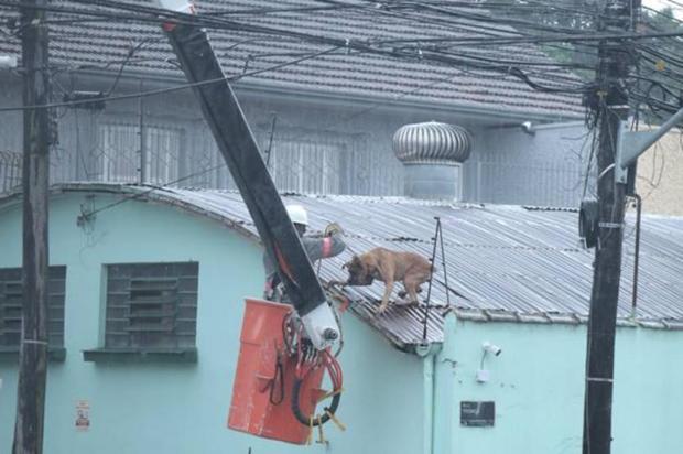Com medo dos trovões, cachorro sobe em telhado e é resgatado por trabalhador em Caxias Janete Kriger/Divulgação