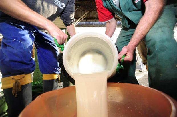 Por que o leite precisa ser jogado fora na Serra Ronaldo Bernardi/Agencia RBS