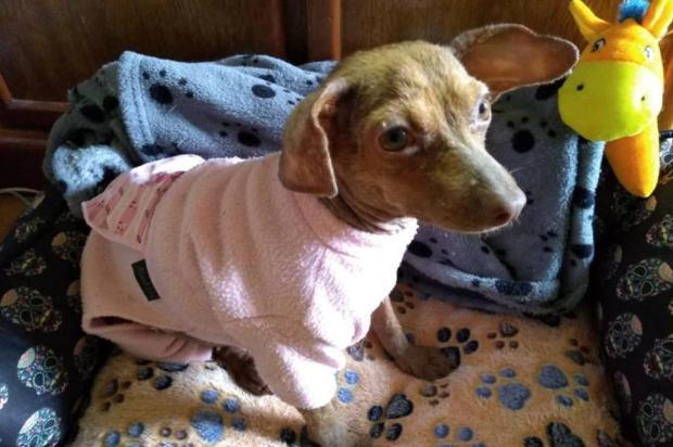 Brechó das Cachorras arrecada recursos para animais carentes em Caxias Acervo Pessoal/Divulgação
