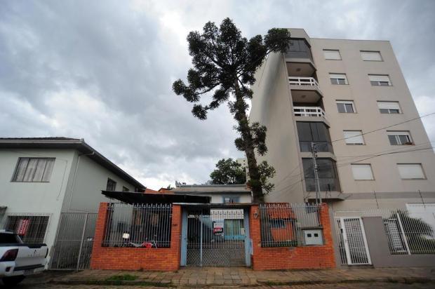 Pinheiro da altura de prédio de seis andares ameaça desabar sobre moradias em Caxias do Sul Felipe Nyland/Agencia RBS