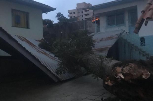 Alerta de moradores se confirma e pinheiro desaba em Caxias do Sul Guilherme Corá/Divulgação