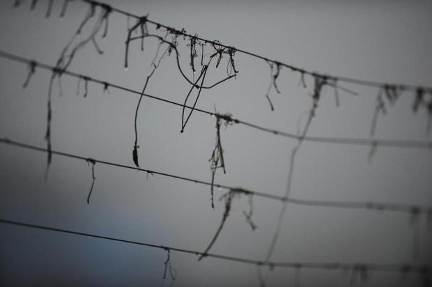 Frio e chuva voltam ao Estado neste final de semana Diogo Sallaberry/Agencia RBS