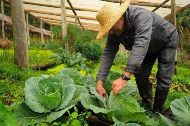 """Sou rico, mas só de saúde"" diz produtor de orgânicos de Caxias Felipe Nyland/Agencia RBS"