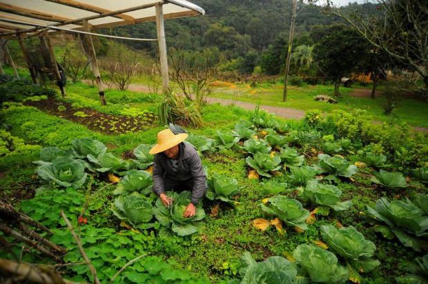 O que o Censo Agropecuário revela sobre a atividade rural na Serra Felipe Nyland/Agencia RBS