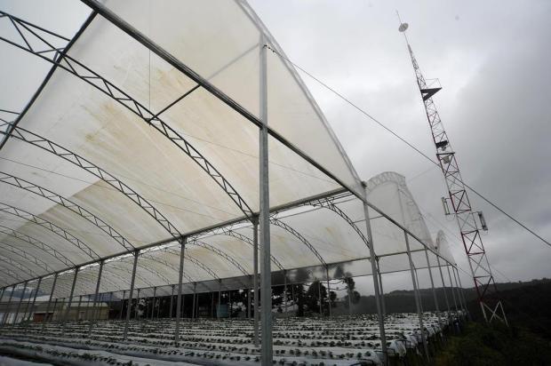 Sem sinal de celular, moradores de distrito de Caxias investem na compra de antenas Felipe Nyland/Agencia RBS