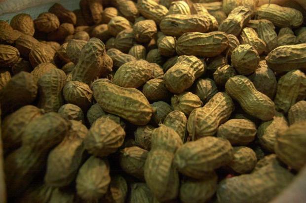 É tempo de amendoim: leguminosa pode ser consumida em diversos momentos Claudio Vaz/Agencia RBS