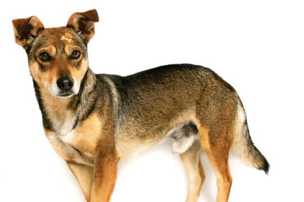 3por4: Brechó Chicão promove exposição com fotos de cachorros para adoção Cristiano Pereira/Divulgação