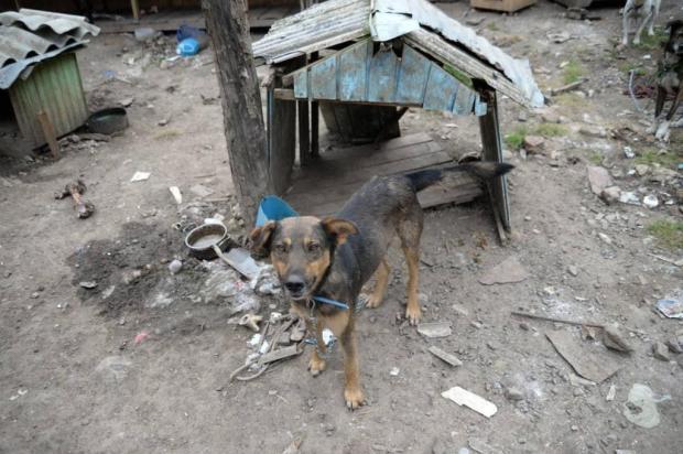 Protetora denuncia maus-tratos a mais de 30 animais em Campestre da Serra Fran Bavaresco/divulgação