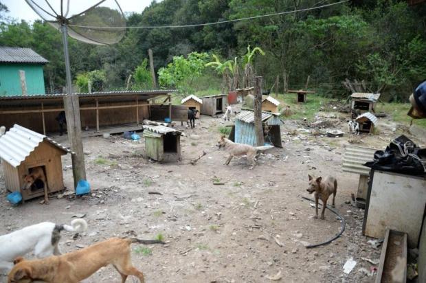 Cães que vivem em condições precárias em Campestre da Serra estão disponíveis para adoção Fran Bavaresco/divulgação