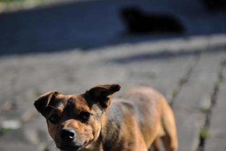 Vacaria sanciona lei para punir quem maltrata animais (Felipe Nyland/Agencia RBS)