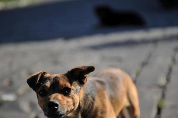 Vacaria sanciona lei para punir quem maltrata animais Felipe Nyland/Agencia RBS