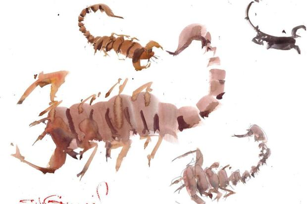 Pedro Guerra: seja um escorpião e não um dinossauro Antonio Giacomin/reproduçao