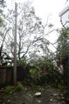 Há registro de queda de árvores e outdoors em vários pontos da cidade, destelhamento de casas e falta de energia elétrica em alguns bairros. Queda de árvore em beco localizado atrás da escola João Triches, no bairro Pio X.