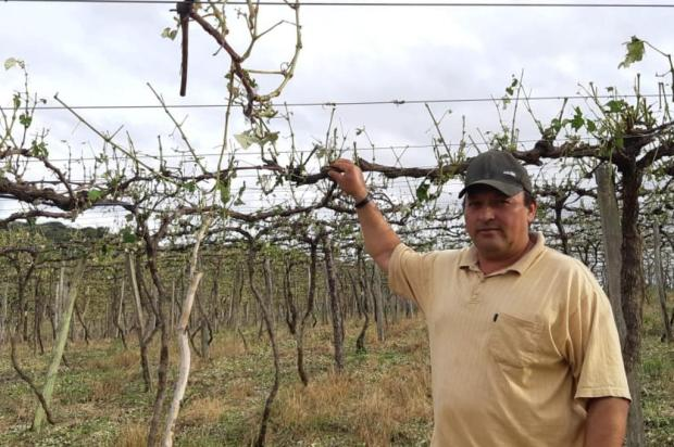 Balanço: o prejuízo causado pelo granizo na agricultura da Serra Hidelbrando de Almeida/Divulgação