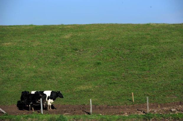 Funcionários da Secretaria de Agricultura questionam fiscalização de pequenos negócios em Caxias Felipe Nyland/Agencia RBS